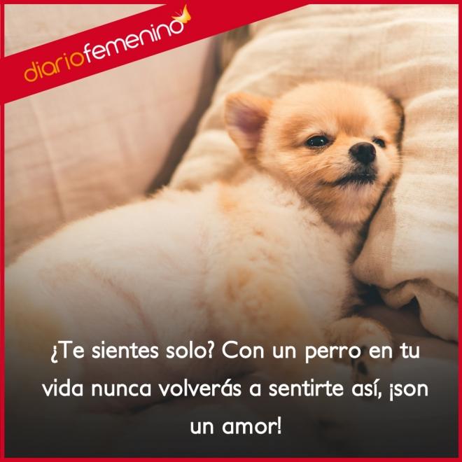 Frases Para Amar A Los Perros Son Un Amor
