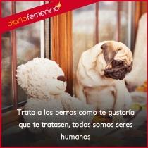Frases para amar a los perros: todos somos seres humanos
