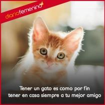 Frases de amor para tus gatos: tus mejores amigos