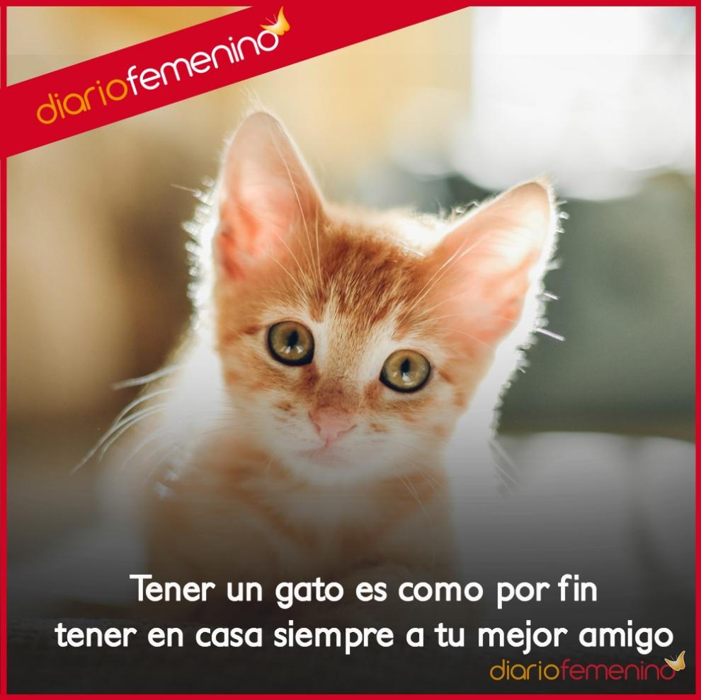 Frases de amor para tus gatos tus mejores amigos