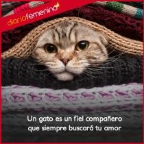 Frases de amor para tus gatos: tus grandes compañeros de la vida