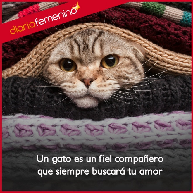 Frases De Amor Para Tus Gatos Tus Grandes Companeros De La Vida
