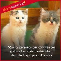 Frases de amor para gatos: tus fieles compañeros gatunos