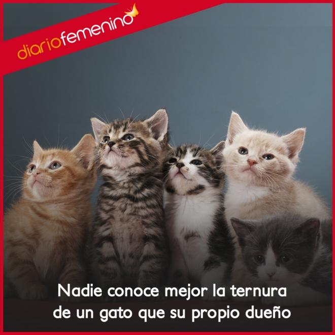 Frases Sobre Gatos La Ternura De Tus Amigos Felinos