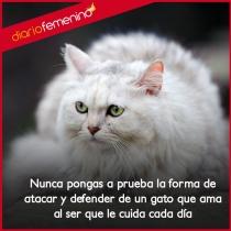 Frases sobre gatos: tus grandes defensores