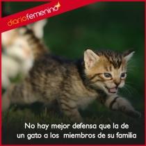 Frases sobre gatos: la mayor protección