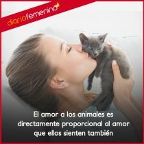 Frases sobre gatos: el amor más incondicional