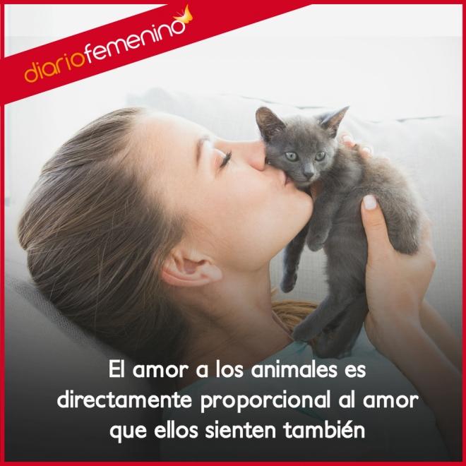 Frases De Amor Para Tus Gatos Los Grandes Compañeros De La Vida