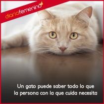 Frases de amor sobre gatos: nunca te fallarán