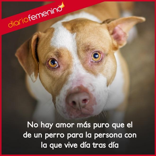 Frases De Amor Para Perros La Profundidad De Un Cariño Infinito
