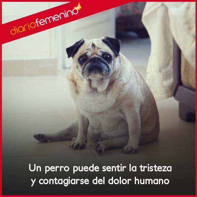 Frases De Amor Para Perros El Dolor Y La Tristeza Contagiados