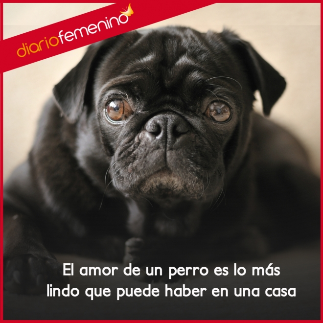 Frases Para Perros El Lindo Amor De Un Hogar
