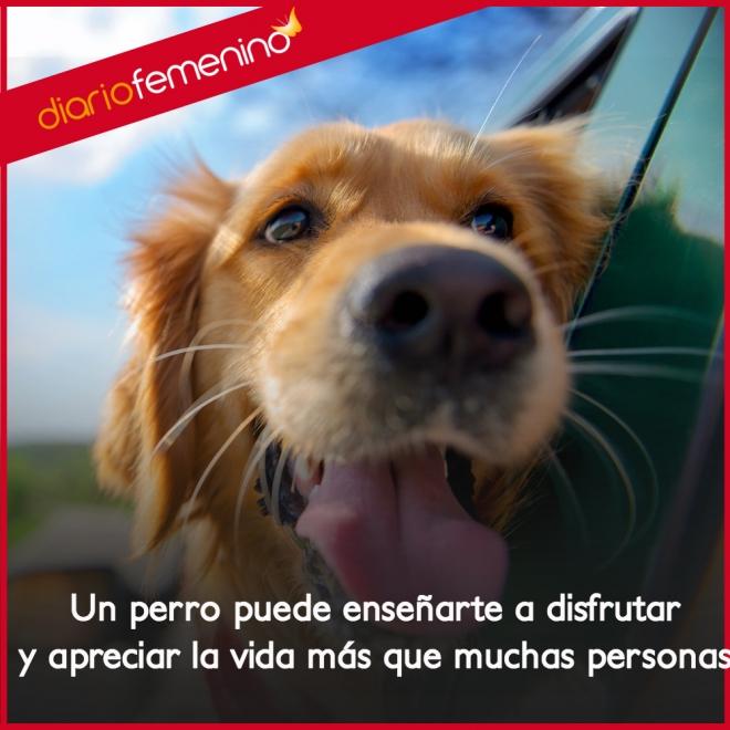 Frases De Amor Sobre Perros Nos Enseñan A Disfrutar De La Vida