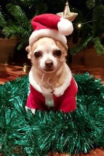 Mowgly, el perrito de Paula Echevarría, celebra la Navidad