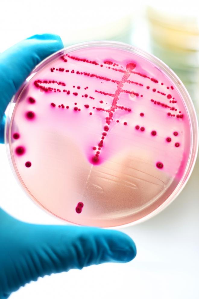 Grandes inventos hechos por mujeres: Antibióticos contra los hongos