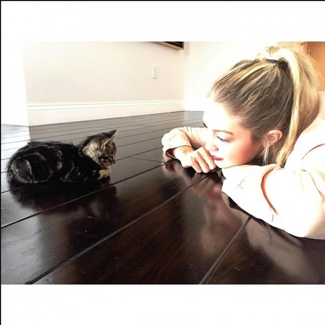 Nombres de gatos de famosos: Cleo, la mascota de Gigi Hadid