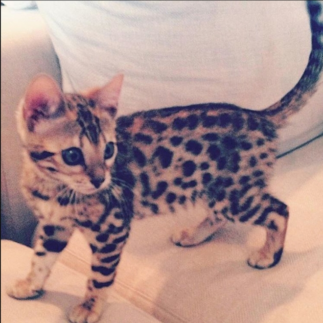 Nombres de gatos de famosos: Charli, la original gata de Kourtney Kardashian