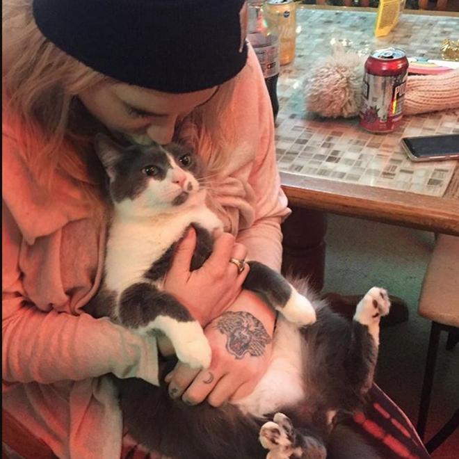 Gatos de famosos: Charlie es el nombre del gato de Kesha