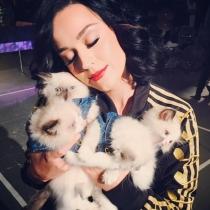 Nombres de gatos de famosos: Morrisey, Krusty The Cat y Kitty Purry, los gatos de Katy Perry