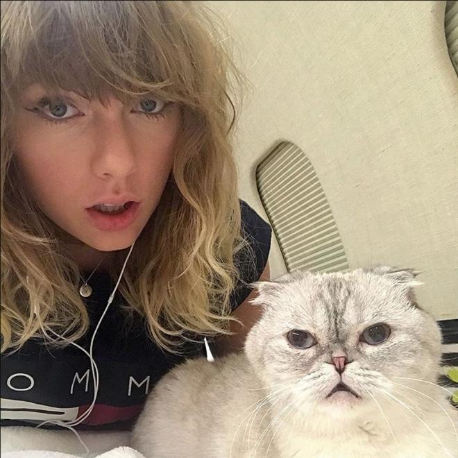 Gatos de famosos: Los felinos de Taylor Swift
