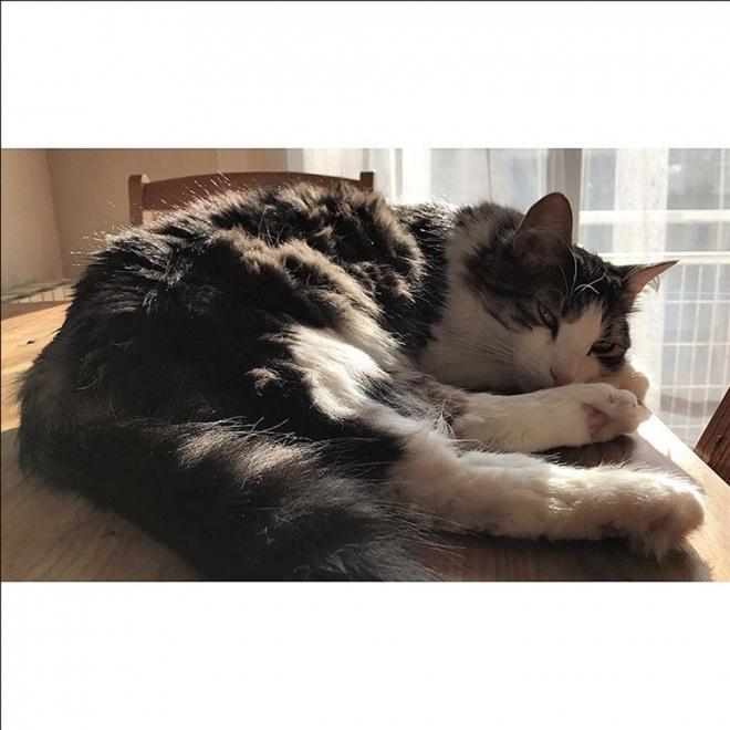 Nombres de gatos de famosos: Drogon y Libertad, los dos gatos de Aura Garrido