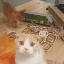 Gatos de famosos: Calippo y Dorito, los gatos de Ed Sheeran