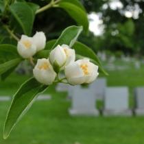Soñar con alguien que ha muerto: ¿qué significa?