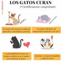 Frase para celebrar el Día Internacional del Gato