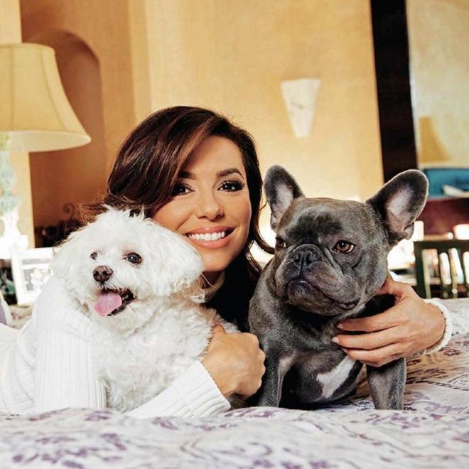 Nombres De Perros De Famosos Las Mascotas De Las Celebrities