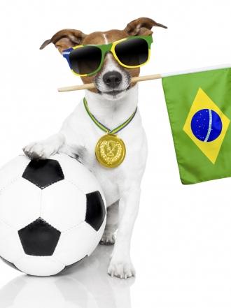 Fotos de perros graciosos: 27 cachorros para comérselos