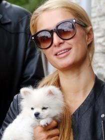 Nombres de perros de famosos: las mascotas de las celebrities