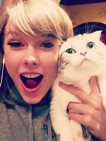 Taylor Swift y otros famosos que adoran a sus gatos