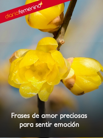 Frases muy románticas para mantener a tu amor verdadero