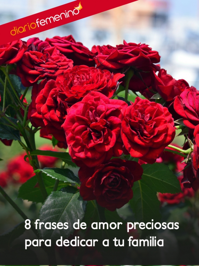 Frases De Amor Ideales Para Dedicar A Tus Familiares