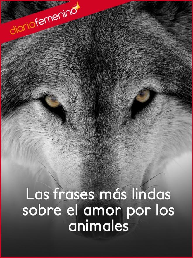 Las Frases Mas Lindas Sobre El Amor Por Los Animales
