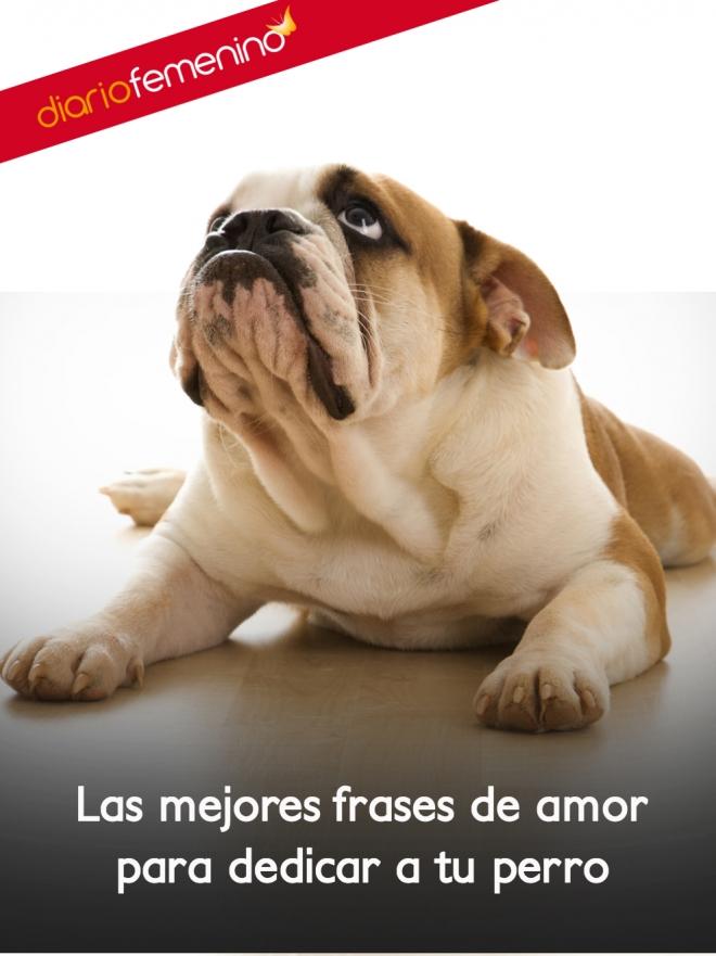 Las Mejores Frases Para Compartir Con Tus Perros