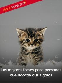 Frases de amor para tus gatos: los grandes compañeros de la vida