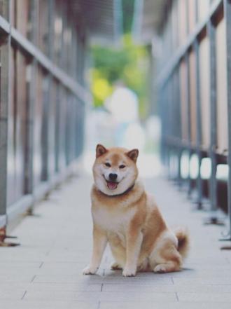 Los perros más famosos en Instagram