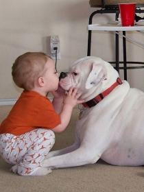 Perros y bebés: las fotos más tiernas