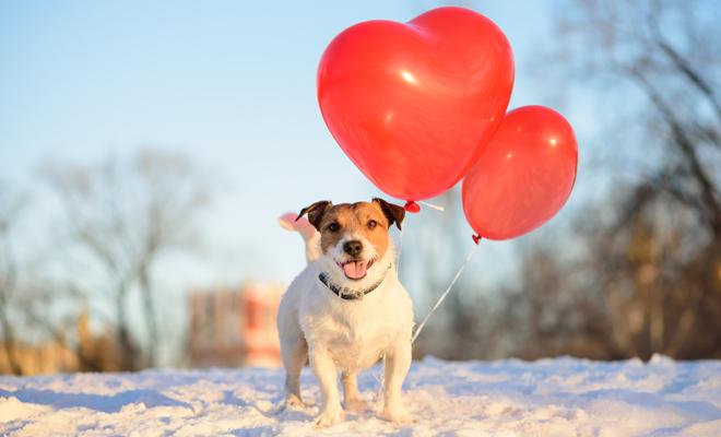 Los perros el día de San Valentín