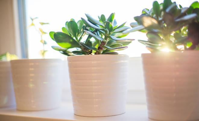 6 tips de decoraci n feng shui para casas peque as for Flores para el hogar feng shui