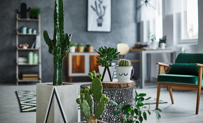Los Cactus Dan Mala Suerte Cuidado Si Tienes Uno En Casa