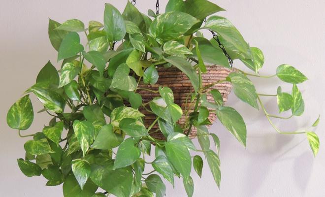Feng shui 8 plantas que atraen la mala y la buena energ a for Plantas entrada casa segun feng shui