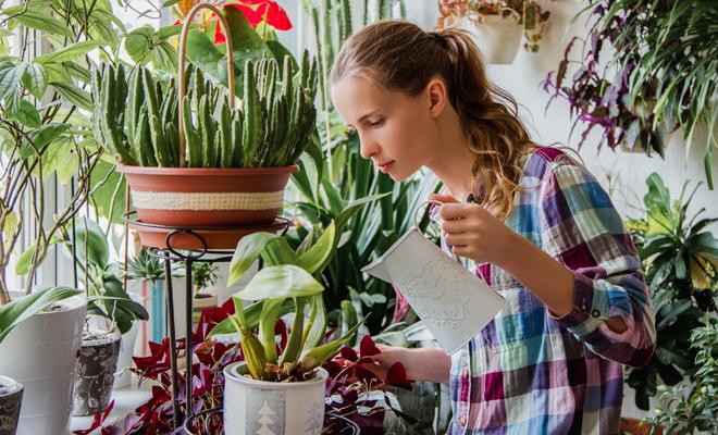 Resultado de imagen para decorar con plantas la casa mejoran la autoestima