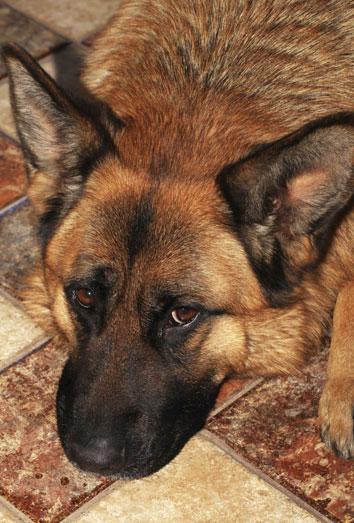 8 Nombres De Perros Hist 243 Ricos Para Poner A Tu Cachorro