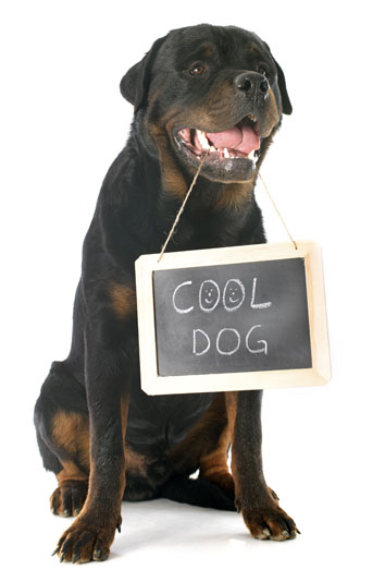 Nombres para perros rottweiler