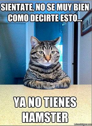 Memes De Gatos Para Partirse De Risa