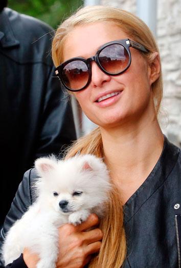 Perros De Famosos Paris Hilton También Adora A Sus Pomerania