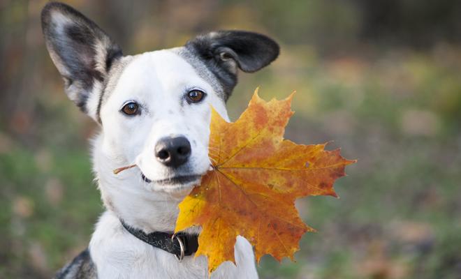 Te puedes inspirar en el otoño para escoger un buen nombre para tu perro