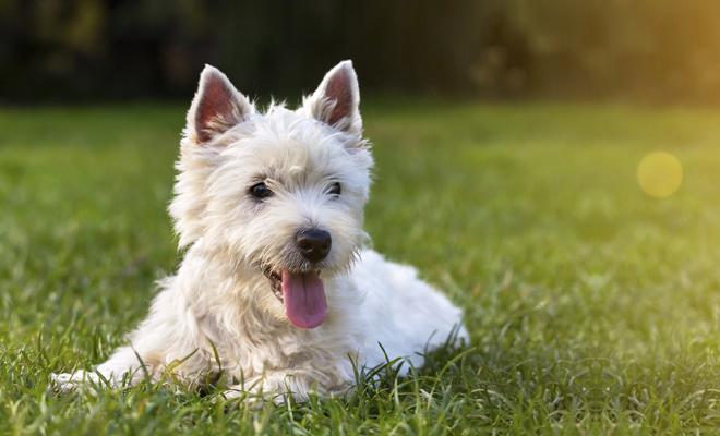 Nombres compuestos para perros